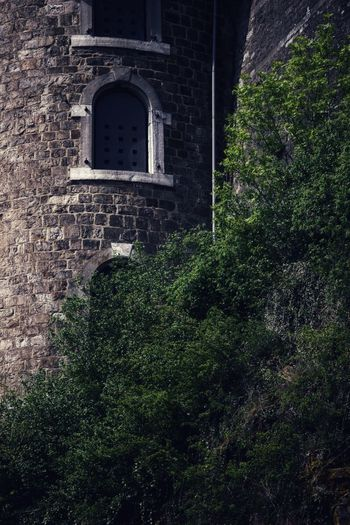 Eyem Best Shots EyeEm Gallery EyeEm Gallery EyeEm Selects Window Lookingup Frog Perspective darkness and light Perspective Brick Wall Old Tree Ivy Architecture Building Exterior Built Structure Growing Historic Castle Fort History Plant Life