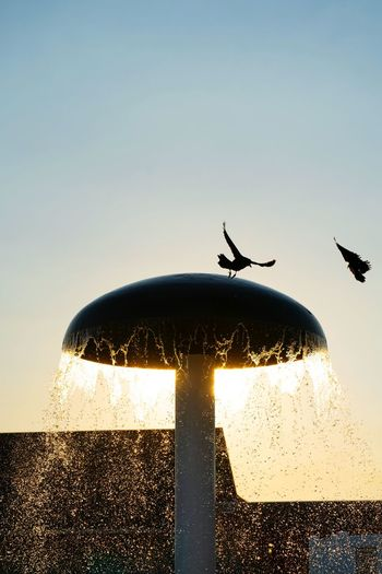 Bird flying over the sea against clear sky