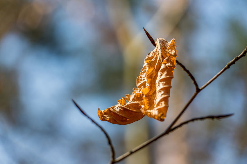 Leaf 🍂 Beauty In Nature Close-up Day Focus On Foreground Freshness Nature No People Outdoors
