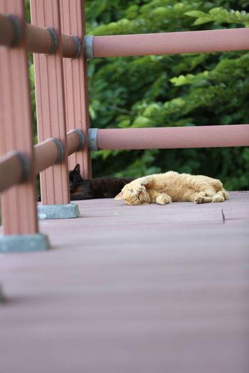 Animals Cat Lovers Cats Cat♡ Cute Cute Animals Cute Cats Cute♡ Enjoying Life