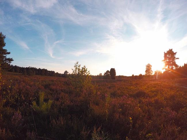 Lüneburger Heide Autumn Field Grass Growth Landscape Nature No People Outdoors Sky