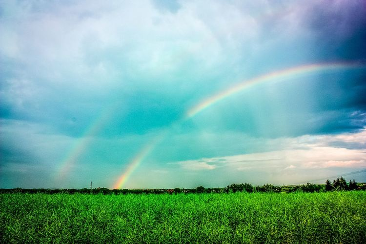 Agriculture Field Rainbow Beauty In Nature Rural Scene Farm Crop  Nature Growth Outdoors Summer No People Dramatic Sky Irrigation Equipment Day Spraying Freshness Sky Doppelter Regenbogen Regenbogen Beauty In Nature