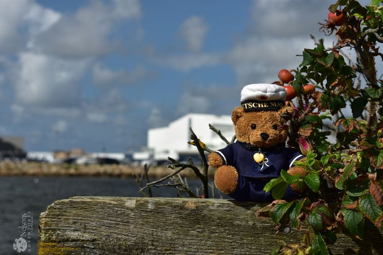 Nelson in Ringkøbing Denmark Denmark 🇩🇰 NelsonsAdventures Teddy Teddy Bear Teddybear Stuffed Toy Ringkøbing Ringkøbing Fjord Fjord Summer Summertime EyeEm Masterclass EyeEm Nature Lover Nature_collection No People Stack Day Sky Outdoors Close-up Nature