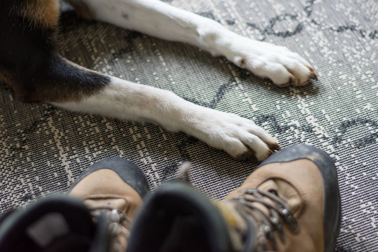 Close up of boots and a dogs paws before going for a walk