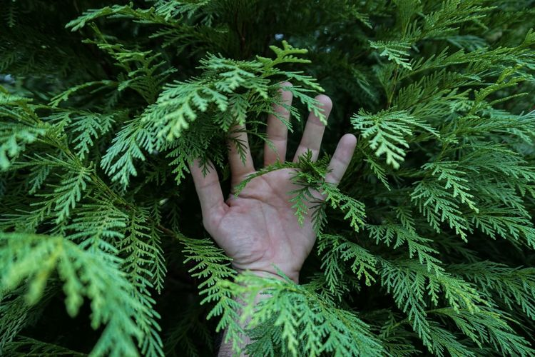 Cropped hand of person by leaves on tree
