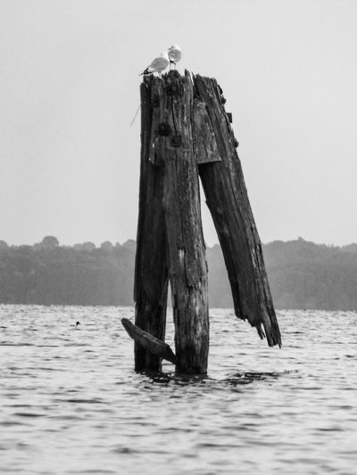 View of bird on wooden post in sea against sky