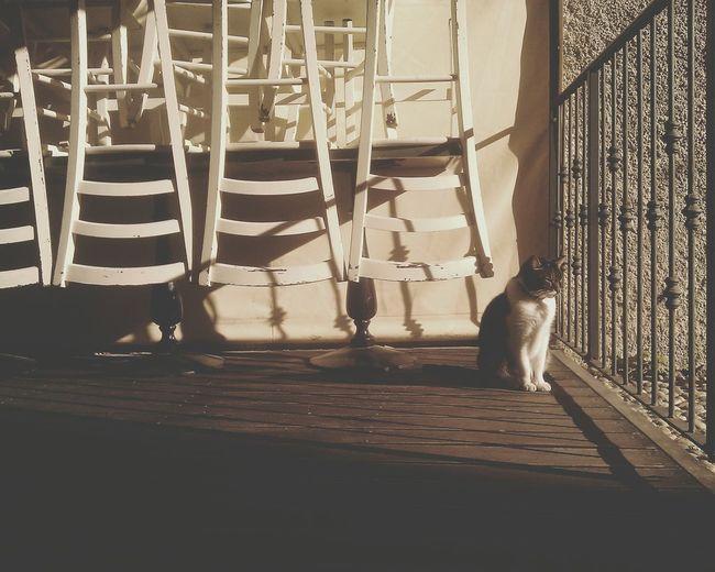 Domestic Animals Animal Themes One Animal Sunlight No People Mammal Day Cat Pets Cats Of EyeEm Taking Sun Sunbathing Shadows Geometric Shapes Geometry Patio Enjoying The Sun Enjoying Life Pet Portraits