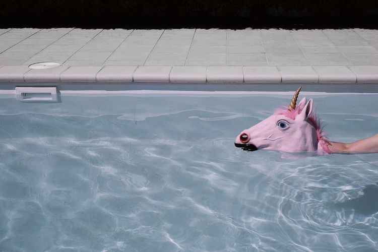 Cropped Hand Holding Artificial Horse Head In Swimming Pool