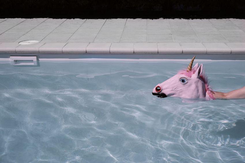 Snakenicorn. Pink Pool Unicorn Unicorn Head Water Swimming Floating In Water