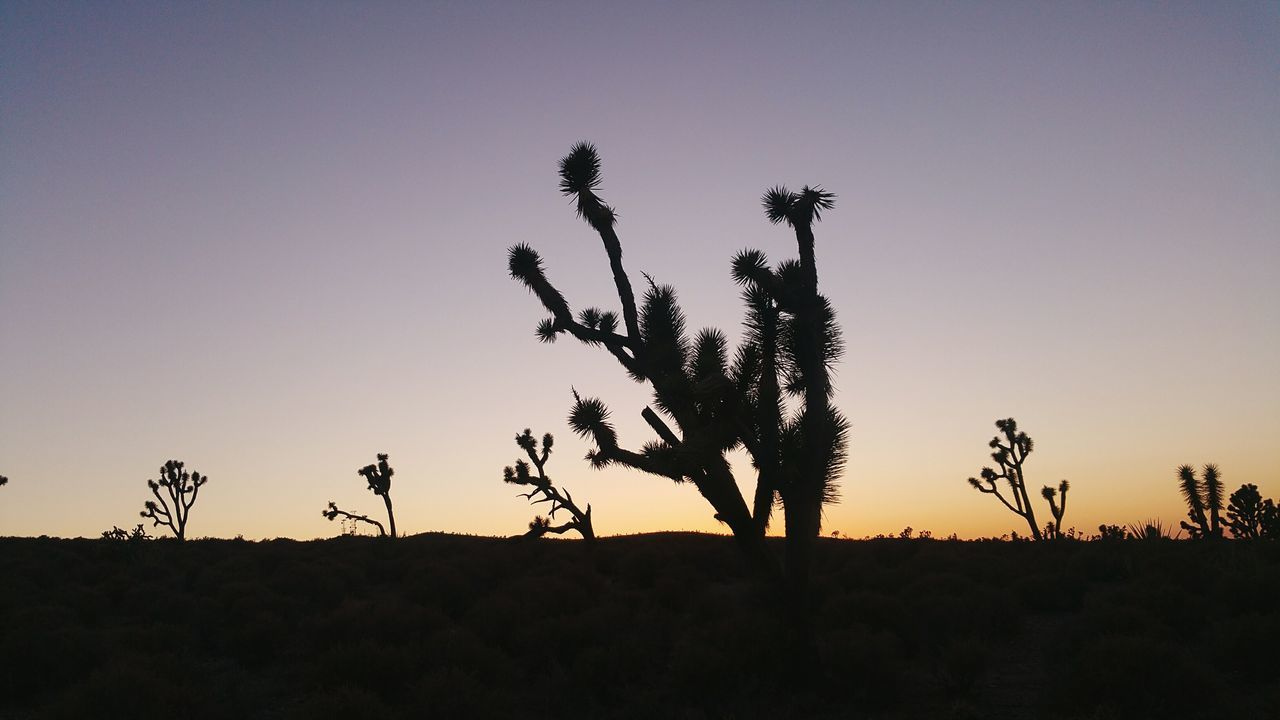 Silhouette Plants On Field During Sunset At Hurricane Cliffs