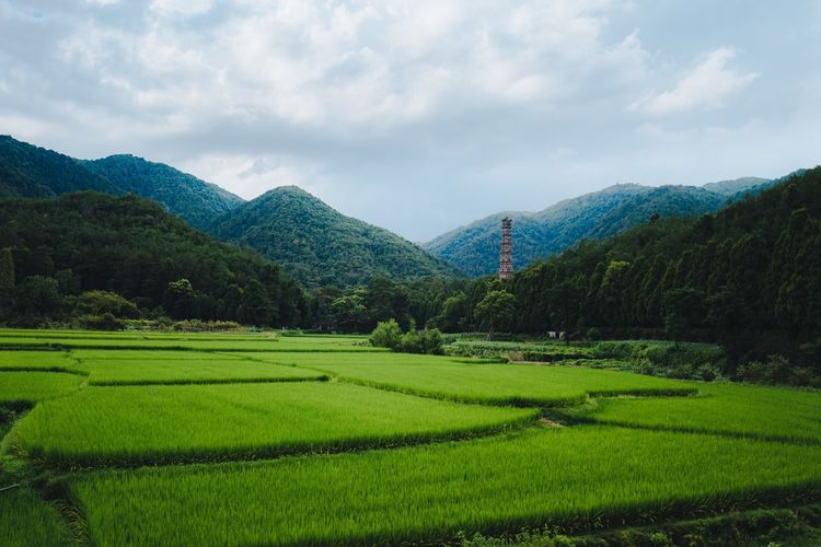 Mountain Beauty In Nature Scenics Agriculture Nature Green Color Landscape Cloud - Sky Rural Scene Sky No People Rice Paddy Outdoors Tranquility Tranquil Scene