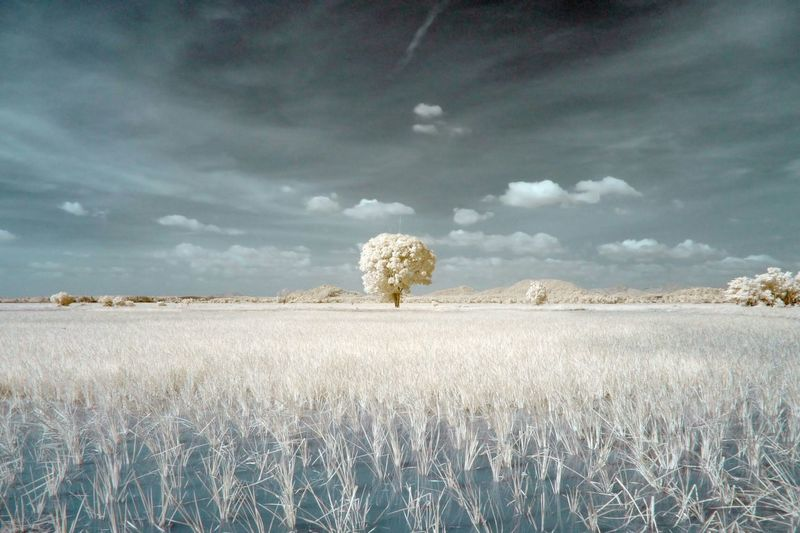 Infrared image of grass on landscape against sky