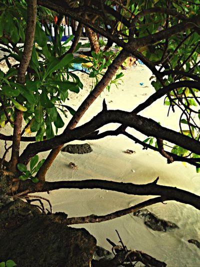 Taking Photos Enjoying Life Crabs!! Sea Maledives First Vacation Loving Life!