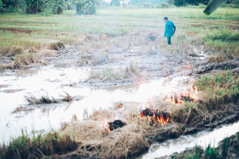 Farmer burn out the paddy waste Men Nature Real People Water Plant Land Field Lifestyles Grass Day Landscape Occupation Environment Working Outdoors Farmer One Person Tree Burning