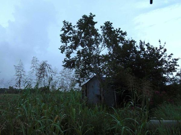 Field House Tree Sky Building Exterior Green Color No People Abandoned House Lifehappens Acerage Rain Clouds Leisure Activity Creepy House Oldhouse Vandalized Beauty Of Decay