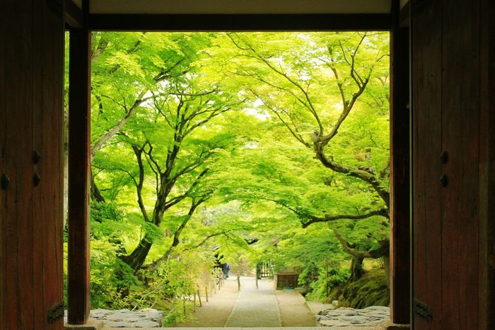 Welcome to the world of green... Holiday Travel Photography Traveling Kyoto Arashiyama Garden Japan Mint By Motorola Looking To The Other Side Spring Into Spring Secret Garden Telling Stories Differently The Essence Of Summer Ultimate Japan Miles Away