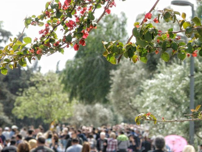 Urban Spring Fever Enjoying Life Hanging Out Urban Nature Springtime Spring Flowers Crowded Crowded Street Athens Athens, Greece Thisio