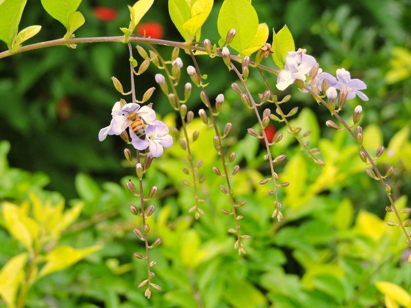 Abelha, Flor, Natureza Perfeita♡♥ Desenho De Deus Pollination Abelhas Flower Polinización Insetosdobrasil Brasil ♥ Peruíbe Nature Flower Polinization