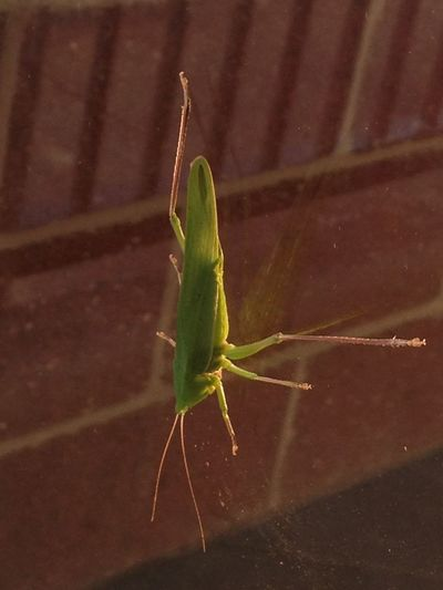 Animal Wildlife Animals In The Wild Close-up In Natural Environment Insect Nature Outdoors
