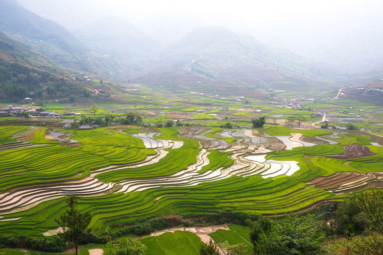 Mountain Scenics - Nature Beauty In Nature Landscape Rural Scene Environment Field Land Tranquil Scene Agriculture Plant Tranquility Rice Paddy Nature Green Color Terraced Field Rice - Cereal Plant Growth Farm Rice No People Mountain Range Outdoors Gardening