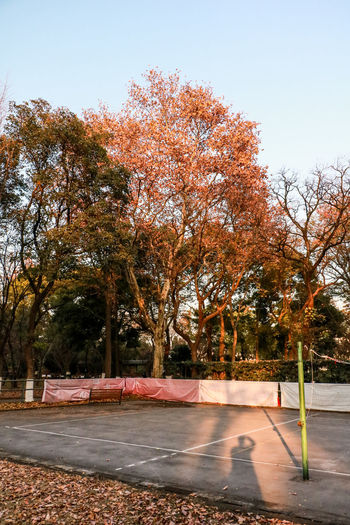 初冬那个秋 Autumn