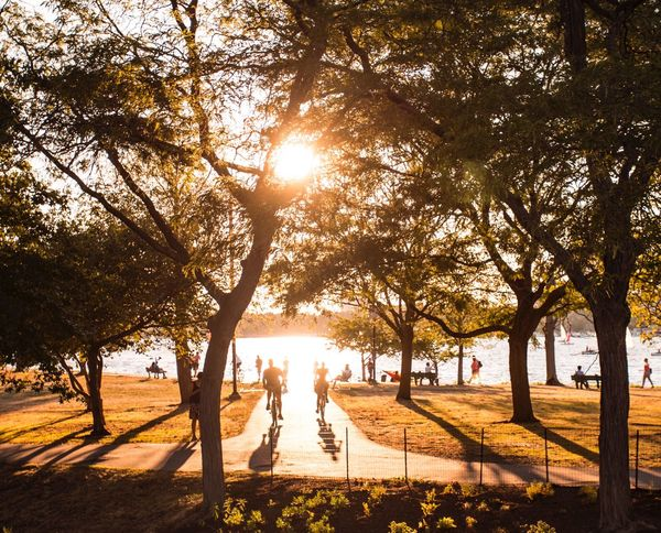 Tree Sun Sunlight Sunbeam Park - Man Made Space Branch Lens Flare Sunset_collection Sunset_captures Sunset Growth Nature Tranquil Scene Tree Trunk Tranquility Day Bright Beauty In Nature Park Pathway Tourism Vacations