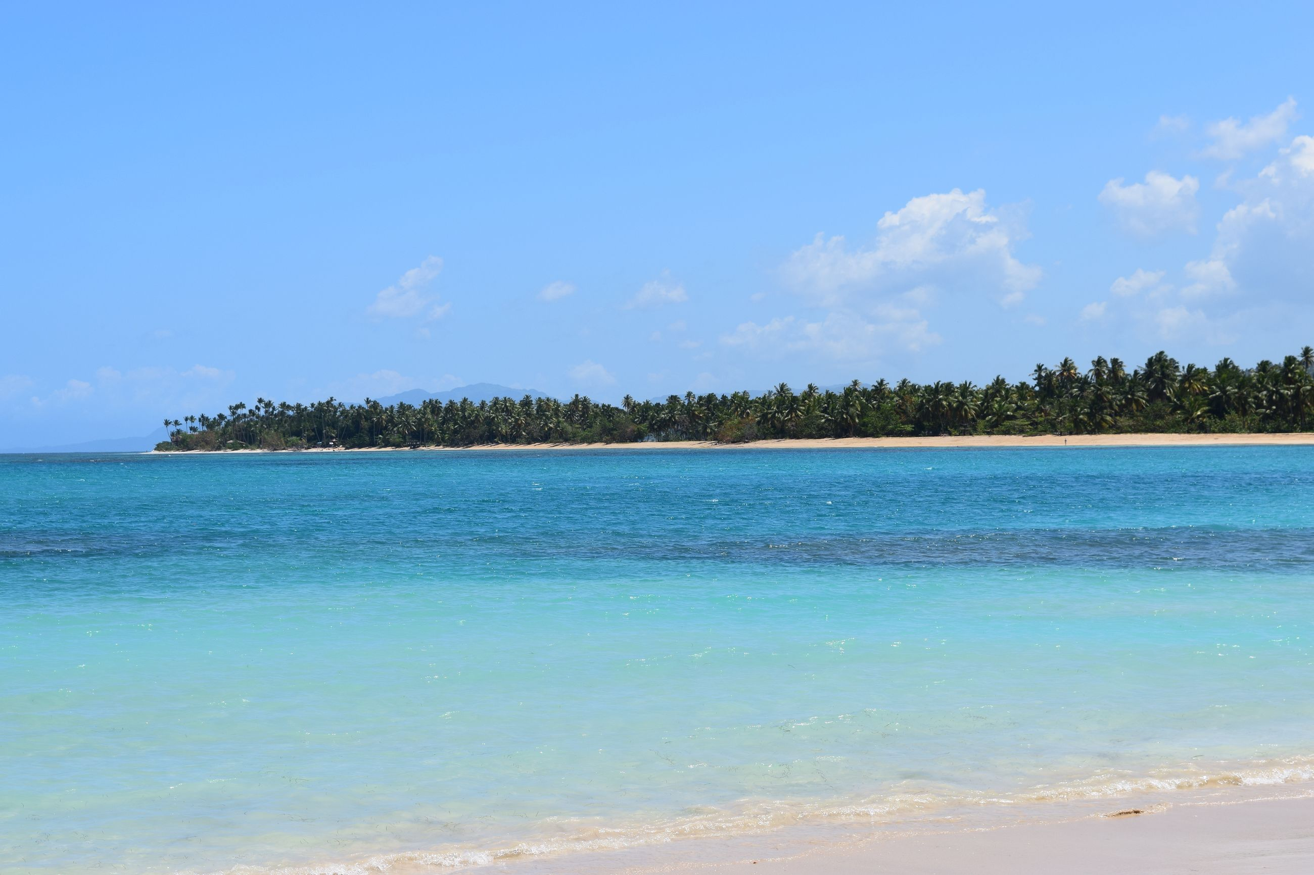 tree, sky, blue, scenics, water, sea, nature, beauty in nature, tranquility, tranquil scene, palm tree, beach, day, outdoors, idyllic, growth, travel destinations, no people, horizon over water