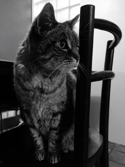 Pets One Animal Cat Millythecat Domestic Cat