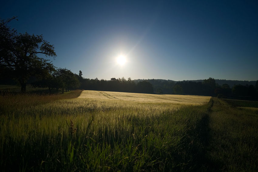 Agriculture Beauty In Nature Clear Sky Day EyeEm Best Shots EyeEm Nature Lover Field Grass Growth Landscape Lens Flare Nature Nikon Nikond3300 Nikonphotography No People Outdoors Rural Scene Scenics Sky Sun Sunlight Tranquil Scene Tranquility Tree The Architect - 2017 EyeEm Awards The Great Outdoors - 2017 EyeEm Awards EyeEmNewHere The Great Outdoors - 2017 EyeEm Awards The Great Outdoors - 2017 EyeEm Awards Sommergefühle Breathing Space Investing In Quality Of Life The Week On EyeEm Paint The Town Yellow