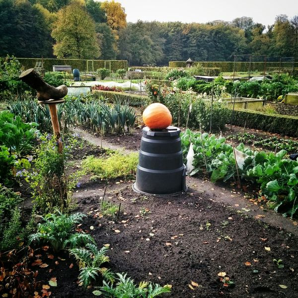 Autumnal allotments Gardening Allotment Pumpkin Groeneveld Baarn Netherlands Holland Holandia Niederlande Autumn