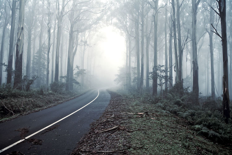 Empty Road Along Trees In Foggy Weather