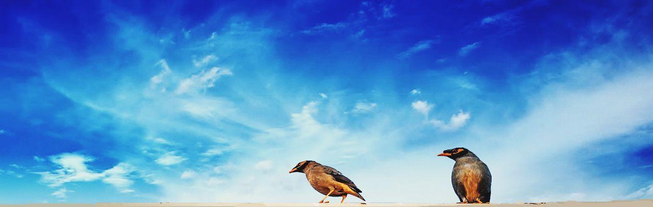 Nature Birds🐦⛅ Sky Beautiful