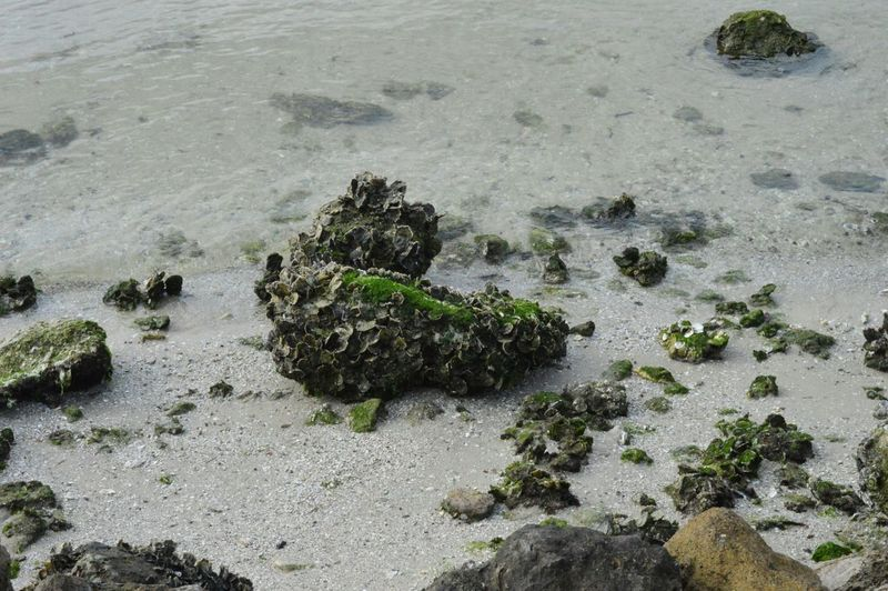 Barnicles Moss Beach Life Beachphotography Whitesand Lowtide  Sea Seashore