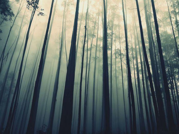 The Great Outdoors - 2017 EyeEm Awards EyeEmNewHere Tree Silhouette Treescape Misty Mountains  Misterious Sri Lanka Travel