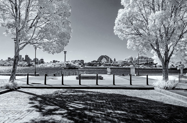 White Winter Leaves Australia Creative Photography Harbour Bridge Pyrmont Shadows & Lights Tree Winter Black And White Blackandwhite Photography Infrared Photography Leaves Sydney Tranquil Scene Travel Destinations White