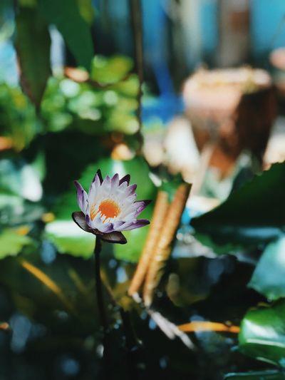 Flower of mom