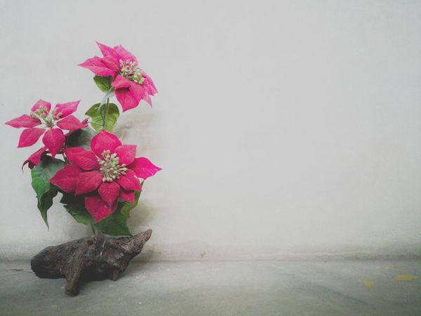 Red flower on cement floor Flower Copy Space No People Indoors  Flower Head Christmas Decoration Day Beautiful Colorful Textured  Backgrounds Cement Wall Cement Floor