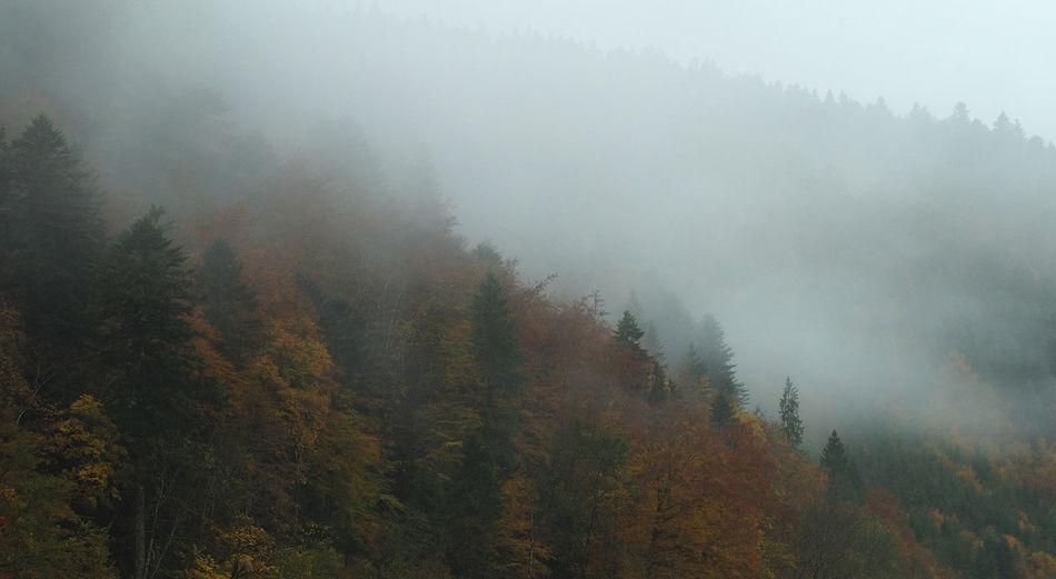 Beauty In Nature Brouillard Doubs Fog Forest Landscape Moteau Nature Paysage Pontarlier Sky Tree