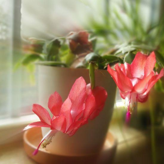 Flower Red Freshness Flower Head