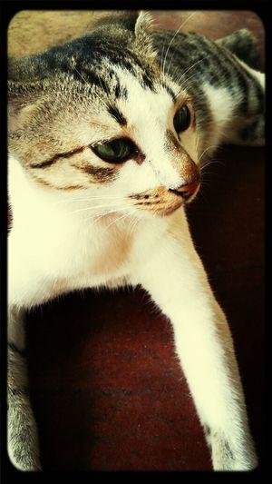 bree? Cats #cutecats Cute♡ I Love Pets Taking Photos