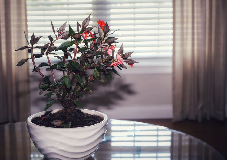 Close-up of small potted plant at home