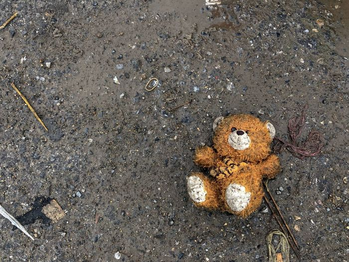 Teddy bear was left on the road in a dirty, wet, dirty state. Sad Alone Bear Doll Abandoned Dirty High Angle View Road Day Asphalt No People Nature Street Wet Land City Outdoors Directly Above Close-up