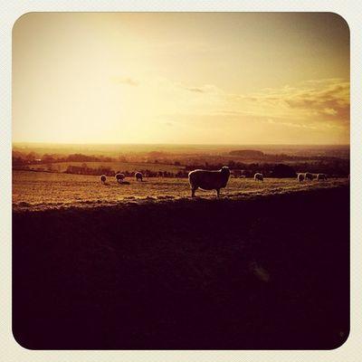 Greetings from Ireland ? Part 3. ? #sunset #photooftheday #earlybirdlove #beautiful_ireland #jj #jj_forum #ireland #hill_of_tara Sunset Sheep Ireland Photooftheday Jj  Earlybirdlove Jj_forum Hill_of_tara Beautiful_ireland
