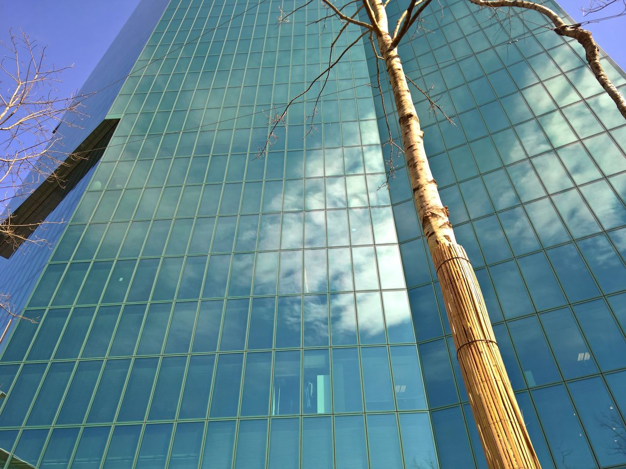 low angle view, no people, day, blue, outdoors, sunlight, growth, sky, architecture, nature, tree, close-up