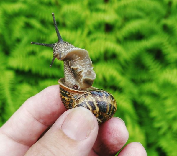 Examination Nature Nature Diversities Macro Animals Snail Snail Collection Resurge Close Up Nature Check This Out EyeEm Gallery That's Me Interested