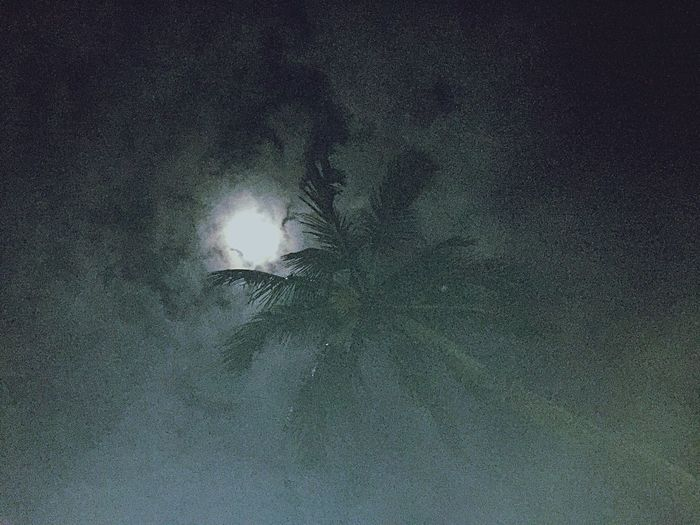 Low Angle View No People Nature Night Beauty In Nature Tree Outdoors Sky Palm Tree Under The Moon Moon Dream Tropical Dream Myanmar The Creative - 2019 EyeEm Awards