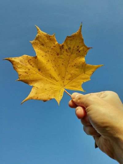 Close-Up Of Hand Holding Yellow Leaf Against Clear Sky