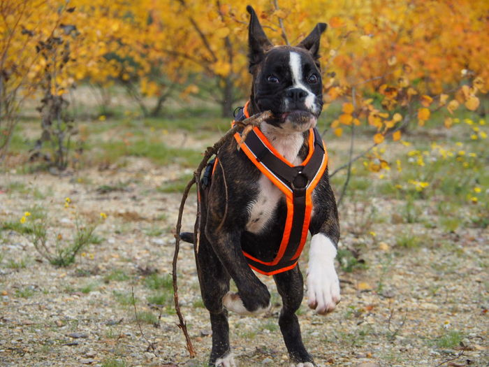 Happy Dog - Happy Weekend 🔆🔆🔆 Hello World Enjoying Life Boxer I Love My Dog Capture The Moment Juno's World
