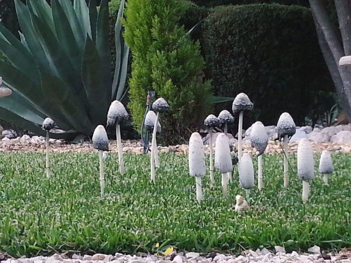 Cogumelos selvagens! !!!