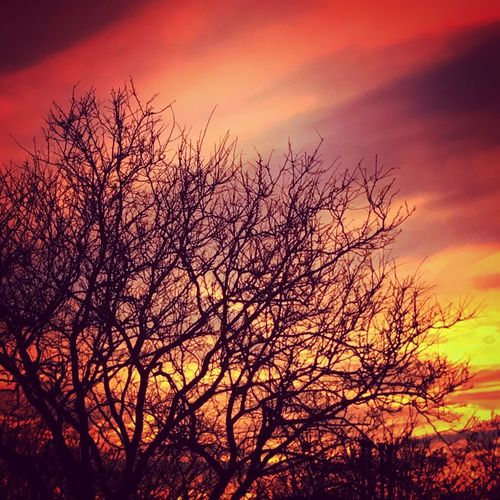 Sunset Beauty In Nature Nature Tree Scenics Sky Orange Color Tranquil Scene Tranquility Bare Tree Outdoors No People Branch Silhouette Low Angle View Growth Day